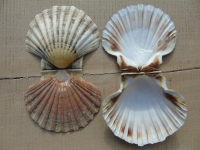 THE MAGIC OF SHELLS : NEW  METHODS  IN MEDIEVAL LUTHERIE